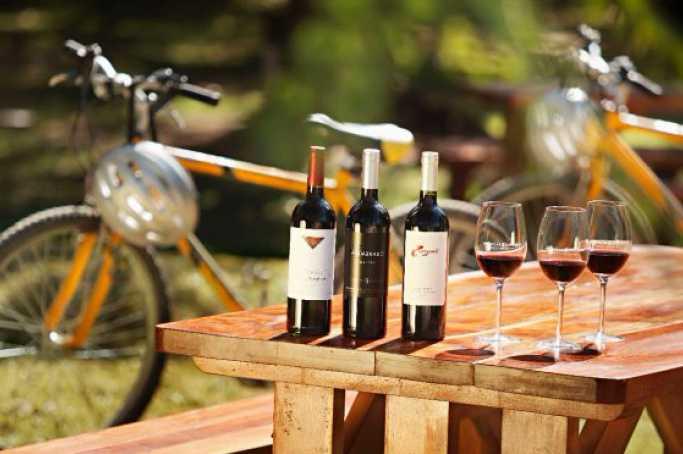 guided wine bike tour stellenbosch